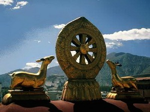 Dharma cakra